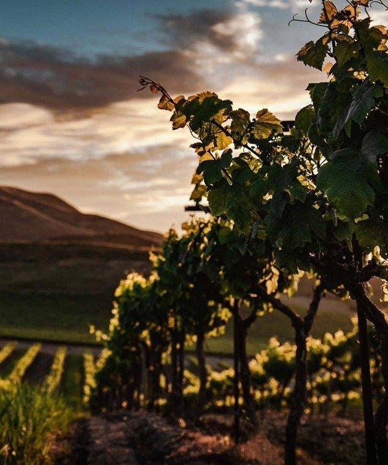 vigne del Piemonte, Monferrato